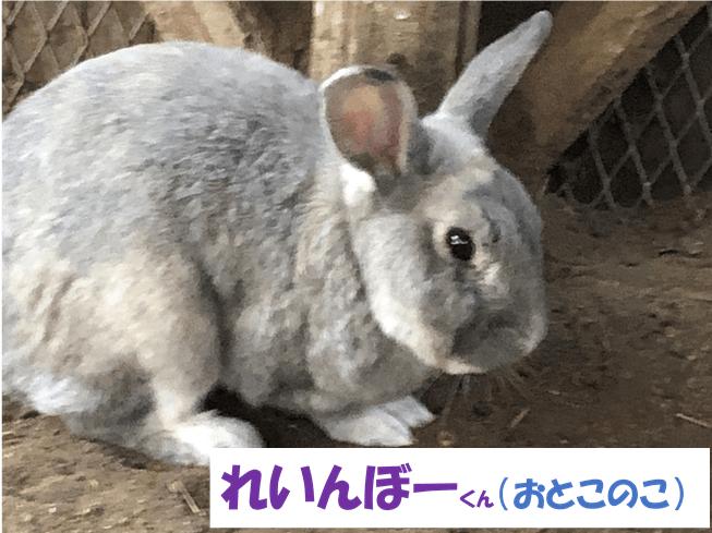 れいんぼーくん(おとこのこ)